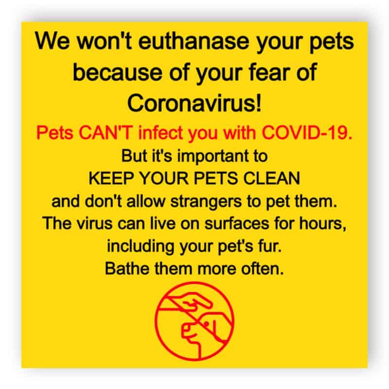 Pets and coronavirus for Veterinary Clinic